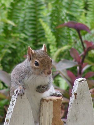 squirrel-1379825-639x852